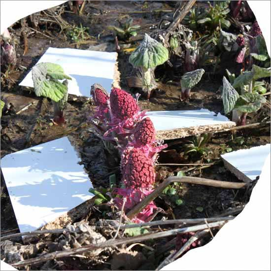 RE-flower II (no. 1)