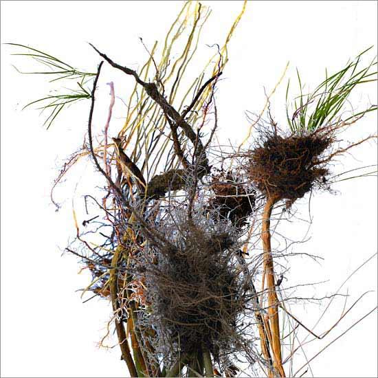 Roots (no. 2)