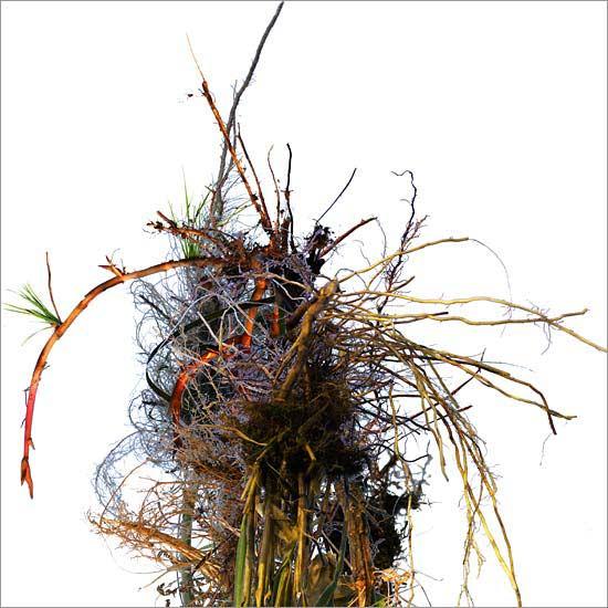 Roots (no. 3)