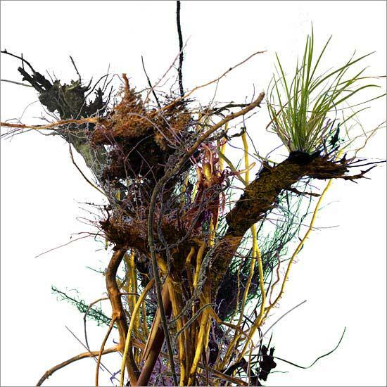 Roots (no. 4)