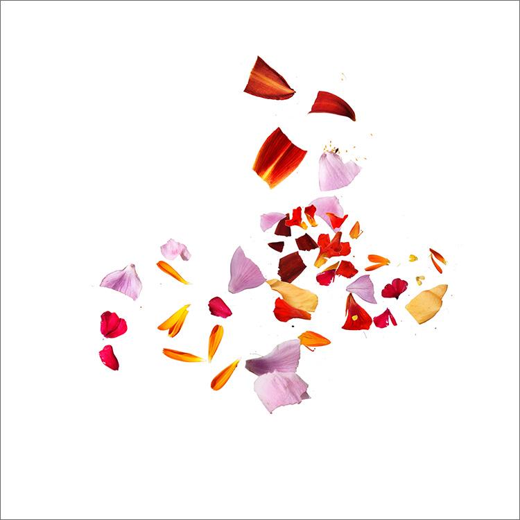 RE-flower (b47)