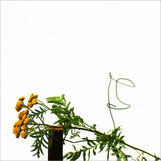 RE-flower III (no. 11)
