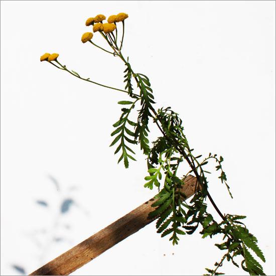 RE-flower III (no. 15)