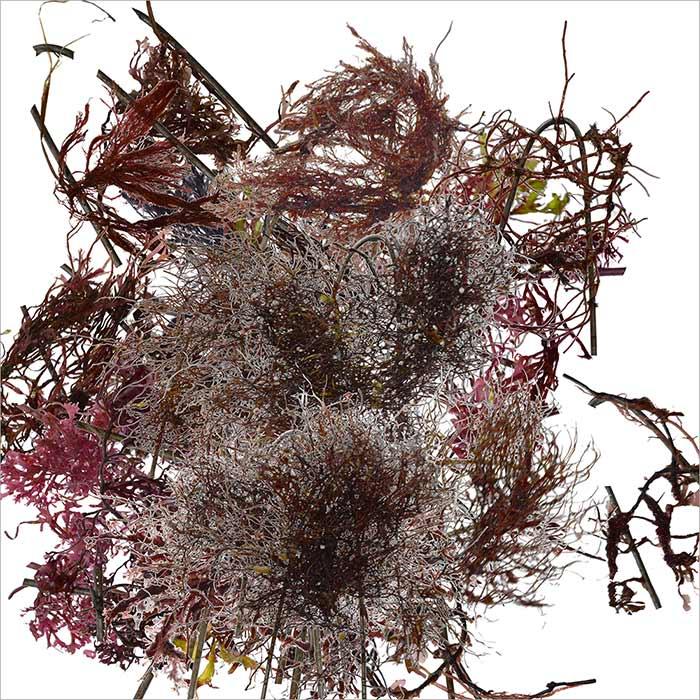 RE-flower 6 (no. 4a)