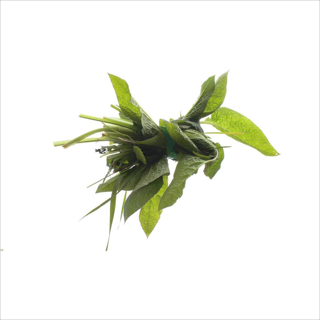 RE-flower 12 (no. 6)
